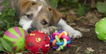 Puppy Toys: The Best Dog Toys For Puppies