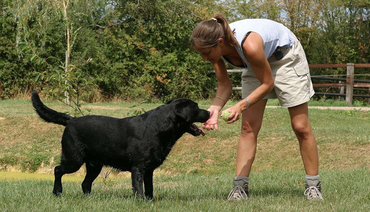 dog-training-builds-relationship