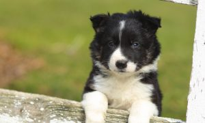 how dogs and puppies learn