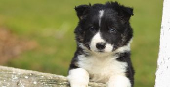 How Dogs Learn: 3 Ways To Change Behavior