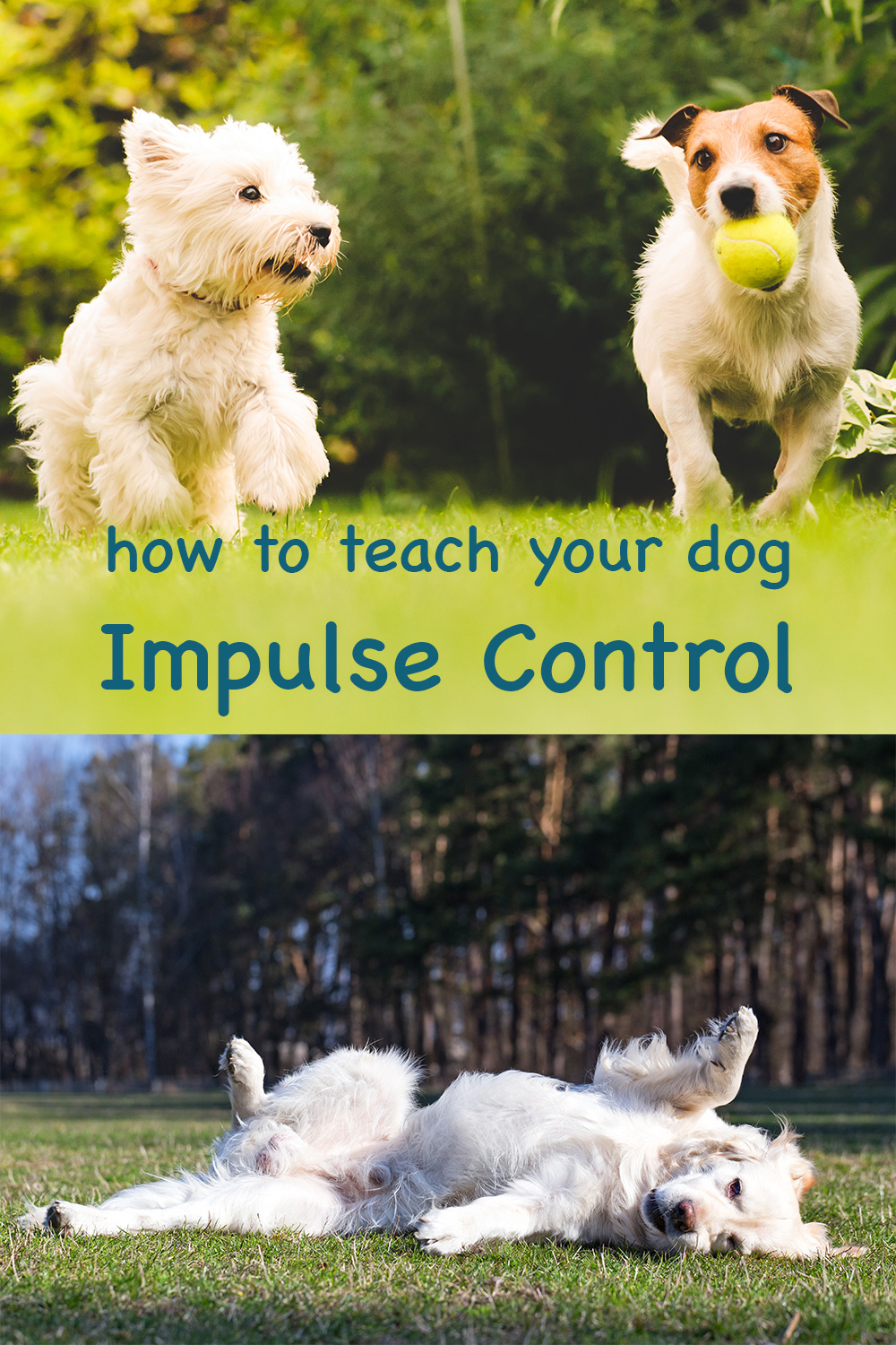 how to teach your dog to control himself