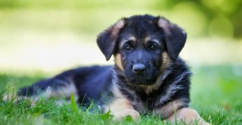 12 Great Reasons To Train Your Dog