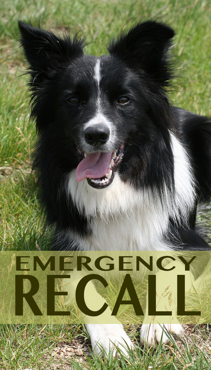 Teach your dog the important emergency recall