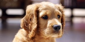Dog Breed Selector: What Dog Should I Get?