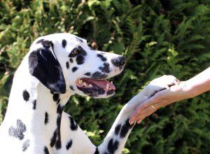 The Three Ds Of Dog Training