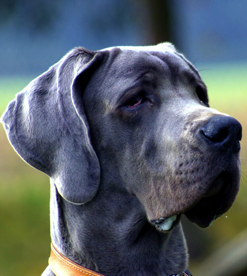 Just how long can a dog live - find out in How Long Do Dogs Live