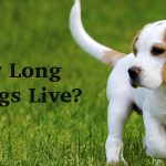 How Long Do Dogs Live: A Complete Guide To Canine Life Span