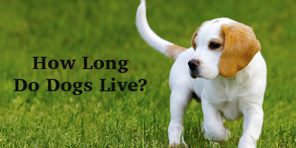 how long can a dog live