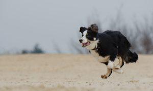 Teach Your Dog The Emergency Recall
