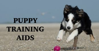 Puppy Training Aids: Our Top Choices