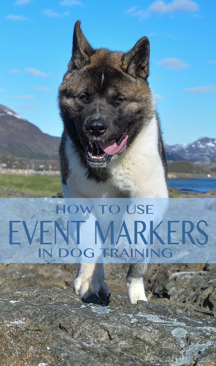 How markers can help you train your dog.