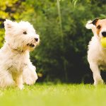 9 Ways To Have A Successful Dog Training Session