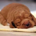Dog Names: Great Ideas For Naming Your Puppy