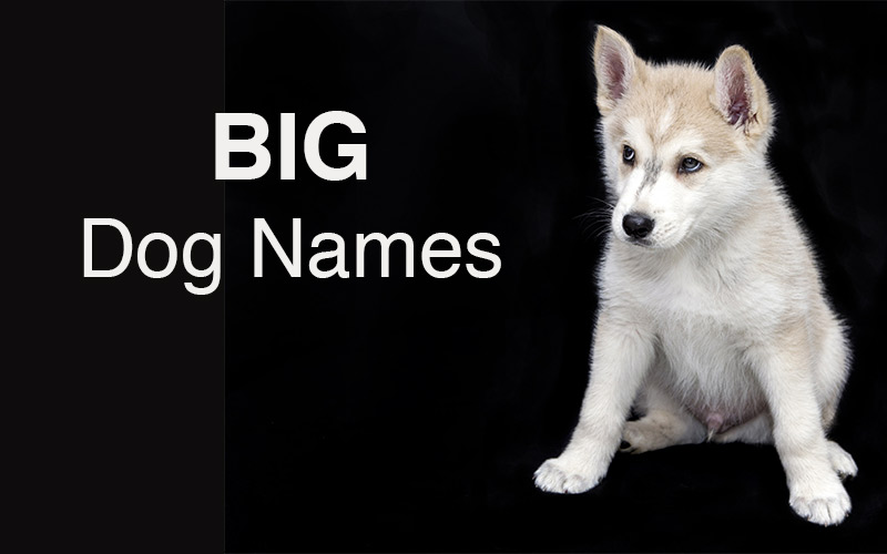 Big dog names - great ideas for your large breed puppy