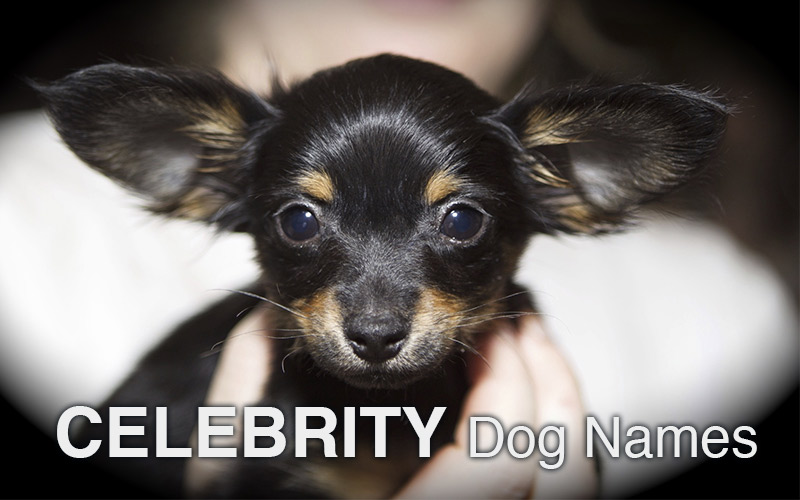 Celebrity Dog Names - great names for your beautiful puppy