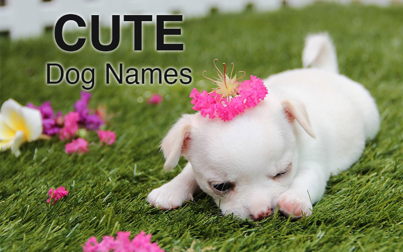 Cute Dog Names - Gorgeous names for your adorable puppy