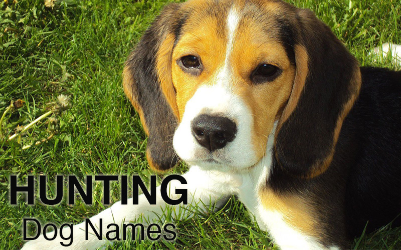Hunting dog names for your new puppy