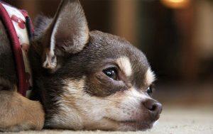 Dog Insurance: Is Pet Insurance Worth It?