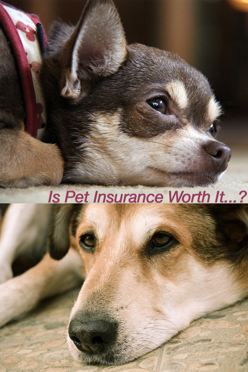 This guide to dog insurance will help you to make the important decisions when it comes to insuring your pet