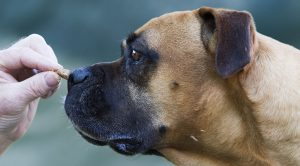 Dog Lure Training: What Is Luring And How To Use It