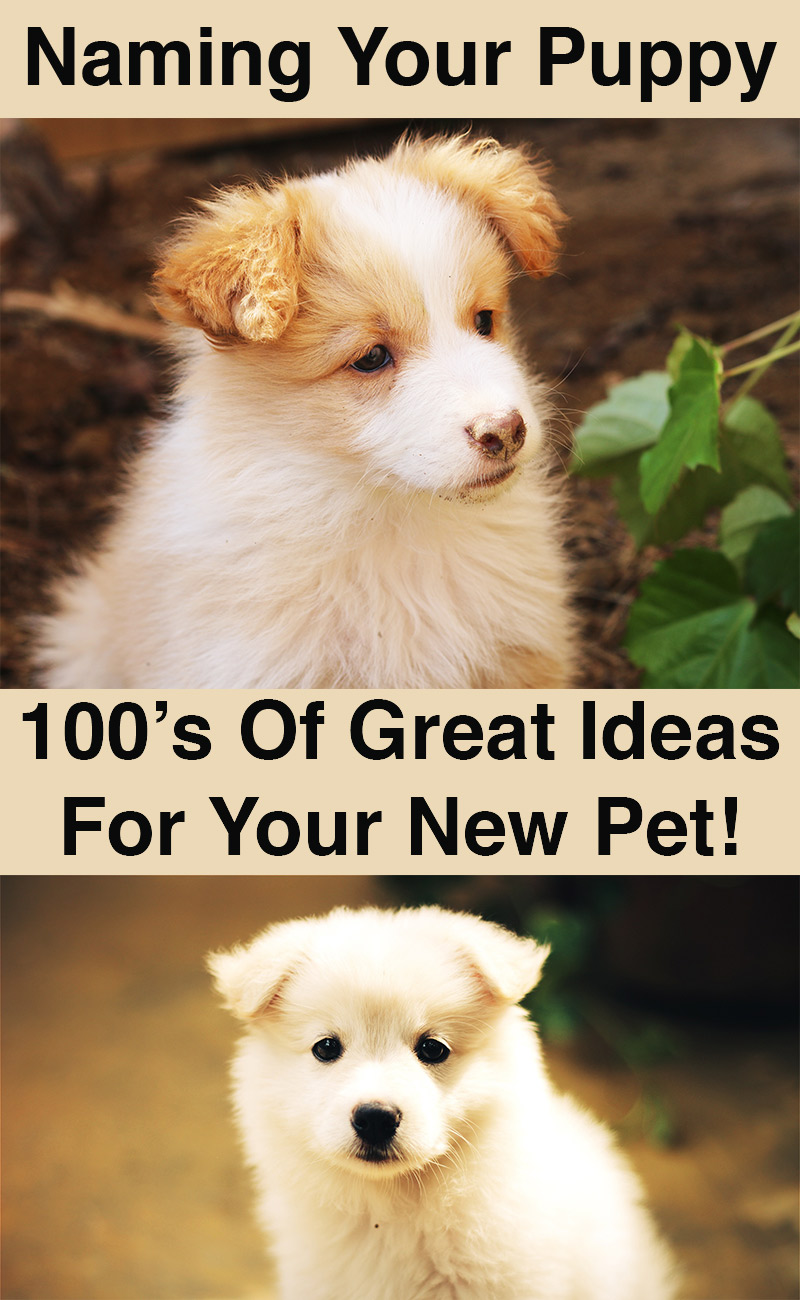 Our Great Guide To Naming Your Puppy Dogs Name