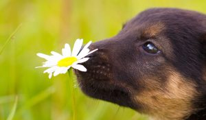 Are Natural Remedies Better For Dogs And Puppies?