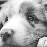 Negative Reinforcement In Dog Training