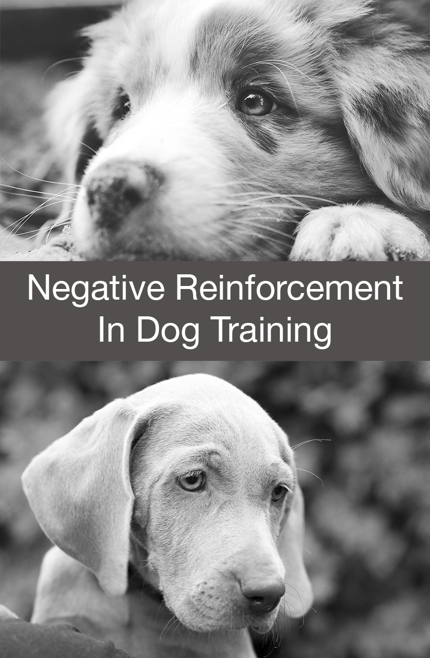 Find out what negative reinforcement is and how it's used in dog training