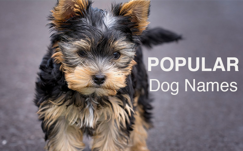 Popular Dog Names - The top names for your gorgeous new puppy