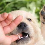puppy-biting