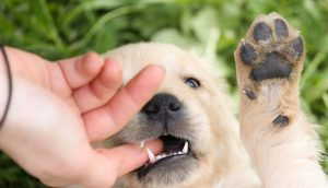 Biting Puppy: A Complete Guide To Stopping Puppies Biting