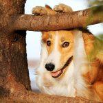 shaping-in-dog-training