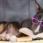 stage 2 dog training is about language
