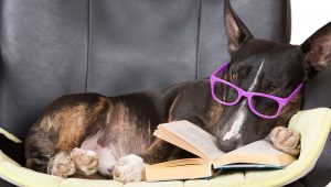 Stage Two Training: Making Sense To Your Dog