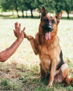 shaping a high five dog training