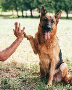 shaping a high five dog training