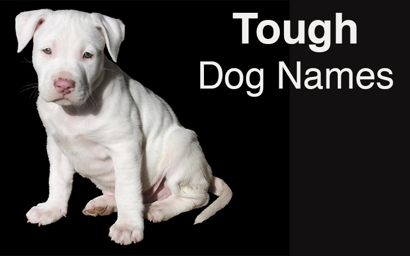 Tough dog names - Great ideas for naming your gorgeous little pup