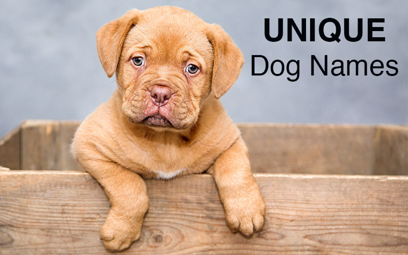Unique Male Puppy Dog Names