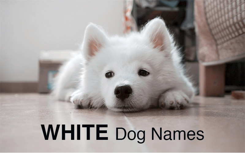 Names For Dogs With White Socks
