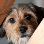 Aversives: What Are They And Can You Train Your Dog Without Them?