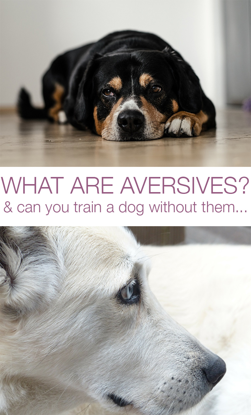 aversives, and how to train a dog without them
