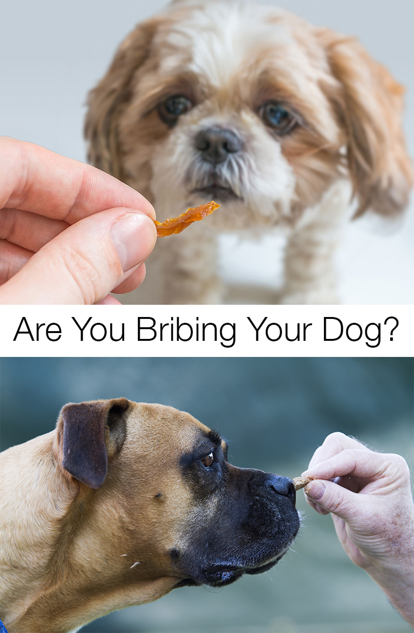 how to make sure you are training, not bribing, your dog!