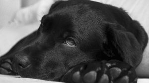 Dog Flu: Symptoms And Treatment For Canine Influenza