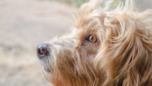 What Is Stimulus Control And How Is It Used In Dog Training?