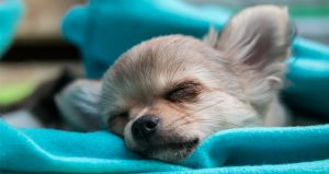 Best Puppy Beds For Your Sleepy Little Dog
