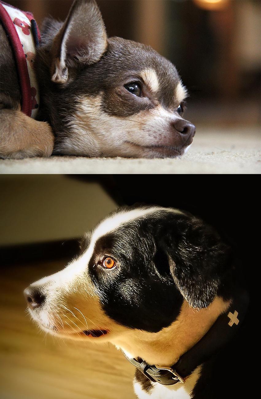 depressed-dogs