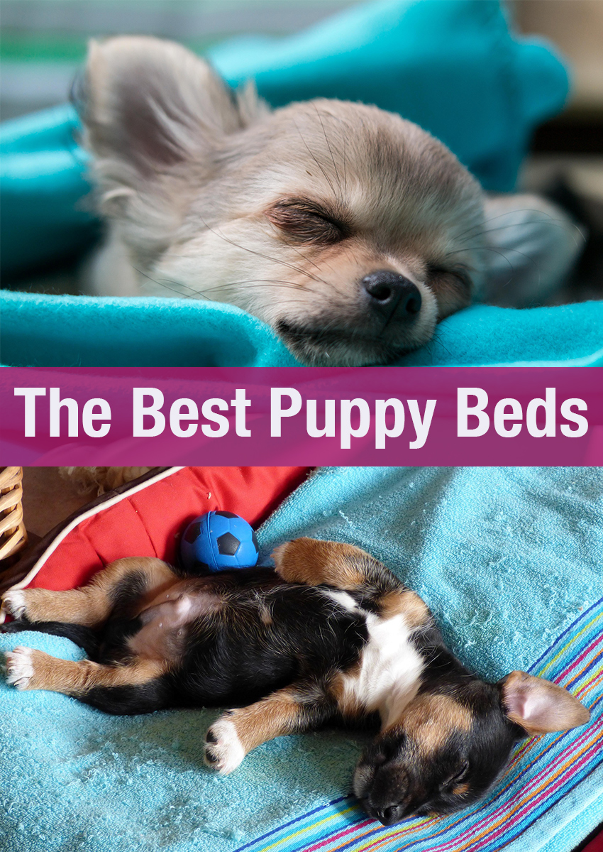 Help with choosing the best puppy beds for your new arrival