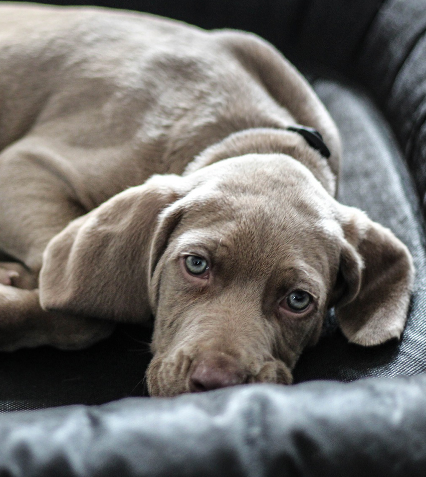 Can Dogs Help You To Feel Again