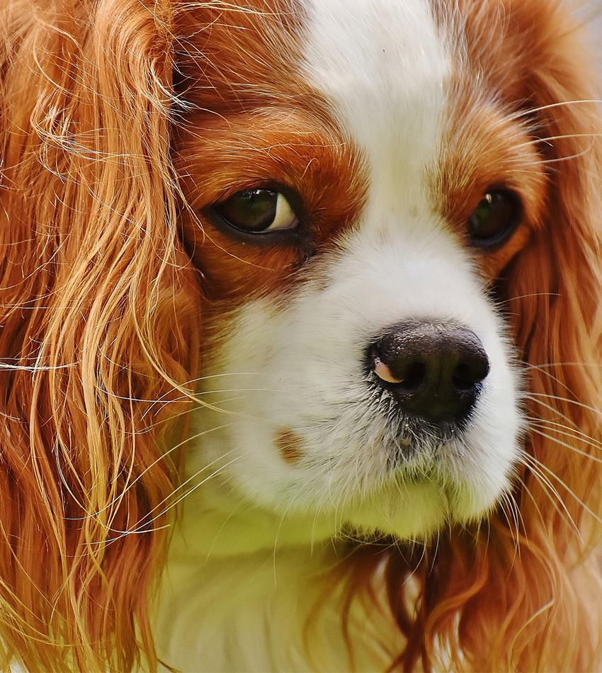 unhappy-dog