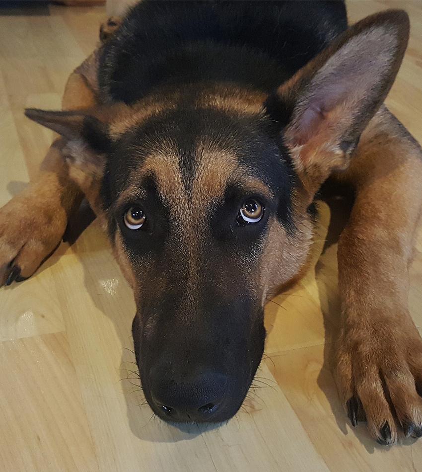 worried-dog